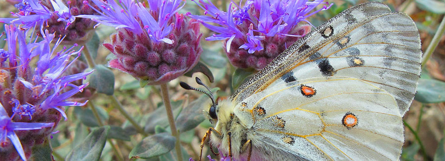 Native Plants for Birds and Butterflies