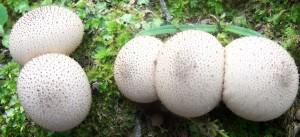 My favorite fungi – mycorrhizae