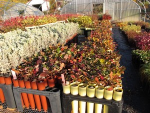 The nursery is expanding… and closing until next year