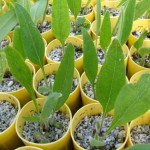 Quiz time! – Wildflower seedlings