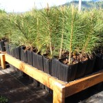 Plant Quality and Containers