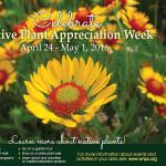 Blanketflower – and NPAW!